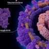 患者服用抗病毒药后可能会出现抗药性流感