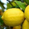 科普人到中年注意饮食及肾炎患者的饮食禁忌是什么呢
