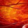 教你心脑血管患者养生饮食清淡多瓜果蔬菜及这八大饮食习惯最招癌