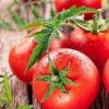 教你夏天养生最适合吃这4种食物及野味营养价值高但要有选择
