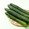 科普夏季养生该从哪些方面入手呢及多吃3种蔬菜助你愉快度夏