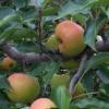 科普夏天养生不容错过的3种水果及哪些食物对肝脏有好处