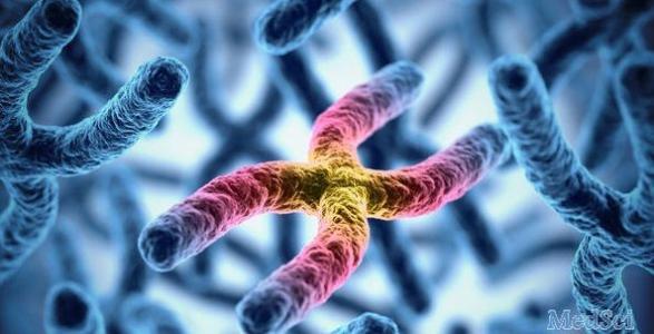 基因疗法可能为治疗斯塔加特病铺平道路