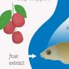 红枣提取物改善鱼的免疫系统