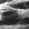 用合成细胞支架代替动物测试