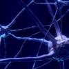 研究人员刺激了猴子大脑中对于意识至关重要的区域 它唤醒了它们