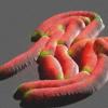 显微镜下的细菌 结核病的新生长模型
