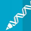 小基因方法可阻止小鼠遗传性肝病