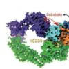 细胞机器如何标记蛋白质降解