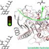 科学家揭示洛伐他汀水解酶的催化机理