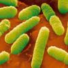 合成生物学领域不仅观察和描述生命过程 而且模仿它们