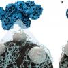 纳米分散离聚物可延长聚合物电解质燃料电池的使用寿命