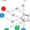 化学家合成具有强大抗糖尿病特性的新化合物