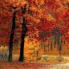 深秋可能是一年中尝试怀孕的最佳时间