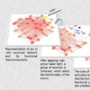 研究神经元网络在神经元丢失后如何恢复功能的新工具