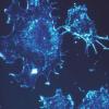 用光控制CAR T细胞选择性破坏小鼠皮肤肿瘤