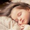 Bmal1基因可能不是昼夜节律的重要调节剂