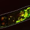 科学家旨在了解5-羟色胺如何调节行为