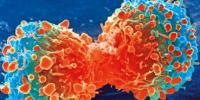 对抗致命的脑部和软组织癌的潜在新武器