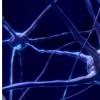 研究发现自闭症青年男性大脑中的关键蛋白含量异常低