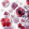 UAH研究可能会对免疫疗法和癌症治疗产生广泛影响