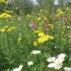 生物多样性提高了草地能源利用的效率