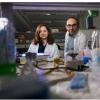 研究人员将细菌细胞转化为生物计算机