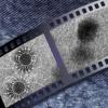 弱力足够强 可以对准半导体纳米颗粒