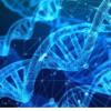 研究人员已经开发出一种可以大大减少蛋白质设计计算
