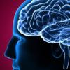 研究表明如何根据大脑区域的活动来控制习惯