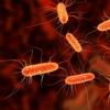 常见肠道微生物中的癌症化学物质