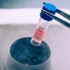 人类干细胞可以治愈小鼠糖尿病
