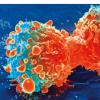 科学家表明药物可能会大大提高癌症免疫疗法的成功率