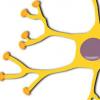提高受损神经内的能量水平可以帮助它们治愈