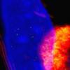 从蝎子到免疫疗法团队将自然毒素用于CAR T