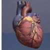 最新研究发现数字心脏模型将有助于预测未来的心脏健康