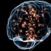 我们的大脑强大而隐秘是视频病毒传播的预报者
