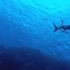 研究人员创造了一种受鲨鱼皮启发的新型声学智能材料