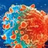 紫杉醇这样的纳米药物已被证明能有效杀死癌细胞