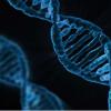 探索组织早期大脑发育的基因