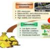 发酵糖提供了不可再生资源的可持续替代品