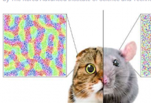 单一生物学因素预测整个哺乳动物物种的皮质组织不同