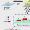 新的纳米策略与超级细菌作斗争