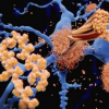 金纳米粒子发现淀粉样蛋白原纤维