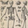智能的骨骼曲线可防止骨折