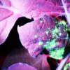 大多数植物病毒基因组均基于单链RNA