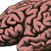 脑部炎症与多种形式的痴呆症有关