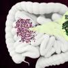 细菌酶可能成为抗生素的新目标