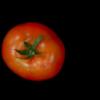 基因开关ENO被确认为番茄果实调节剂
