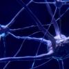 科学家从震颤的神经基础上阐明了新观点